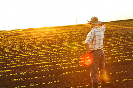 Agriculture Lending